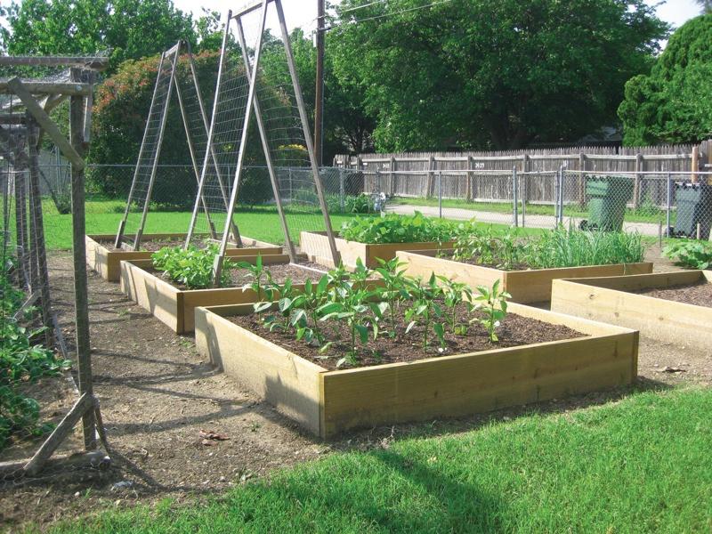 Benefits of Raised Bed Gardening - The Garland Rowlett ...
