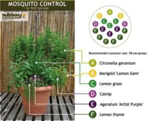 Mosquito_plants