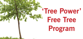 Tree Power Free Tree Giveaway