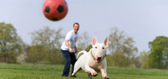 Provide Your Input on Dog Park Plans
